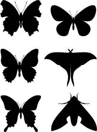 butterfly vector: Vector. Butterfly set 01