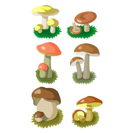 edible mushroom: Mushrooms color set