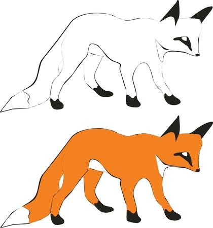 wild life: Fox silhouette