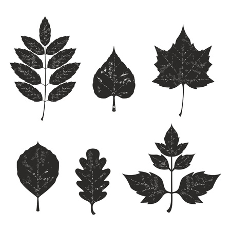 silhouete: Grunge leaves silhouete set 01 Illustration