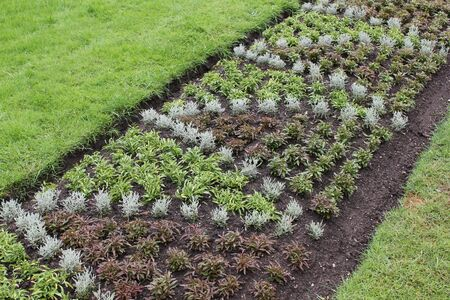 seed bed: Garden beds with seedlings and greens in park 7899