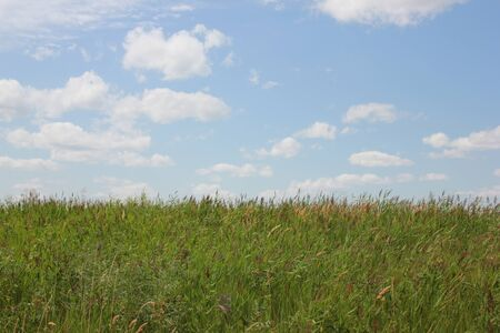 horizon over land: Green grass field and bright blue sky 8383 Stock Photo