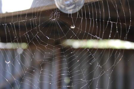 lustre: Spider web on the background light bulb 19677