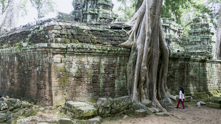 Giant tree roots covering Ta Prom temple, Siem Reap, Cambodia, landmark in Siem Reap, Cambodia. Angkor Wat inscribed on the UNESCO World Heritage List. Archaeological enclosure. Фото со стока - 106050318