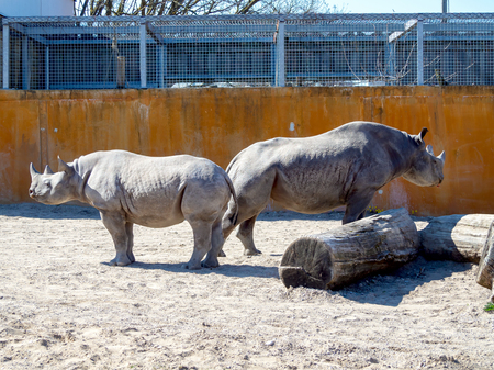 Big rhinocero and baby in zoo, Tallinn, Estonia. Big horned rhino. Warm colors. Copy space for wallpaper, deskto. Mom and cub. The Family concept 写真素材