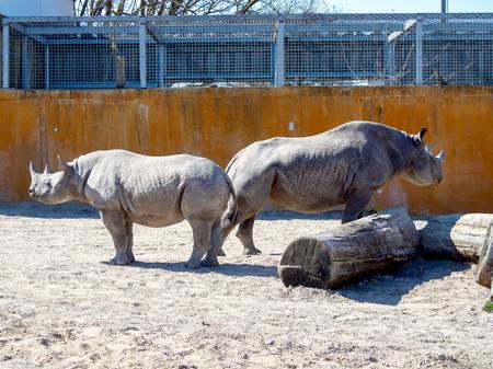 Big rhinocero and baby in zoo, Tallinn, Estonia. Big horned rhino. Warm colors. Copy space for wallpaper, deskto. Mom and cub. The Family concept Stockfoto