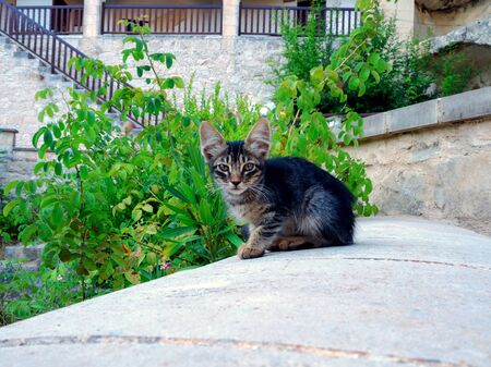 Sad kitty. Little kitten with sad eyes on the green background. Summer time. Street in a village