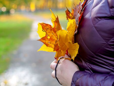 Maple leaf in girl hands. Abstract blurred autumn background. Copy space for advertising. Sunny day, warm weather. Top view. Banner. 写真素材