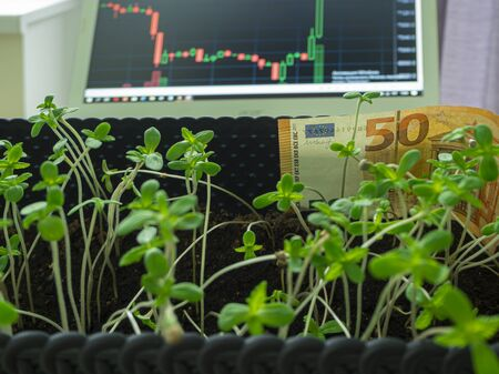 Cannabis is grown on the window, legally for medical purposes. against window. stock exchange market graph on computers creen for business analysis. finance and economic. Trading. Green trend line. Stock Photo