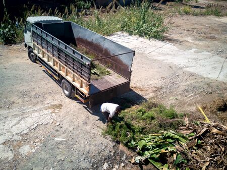 African american man farmer working in his farm. Loading palms trees into a car. Rural worker man loading branches and leaves. Loading A Trailer. Gardening Wheelbarrow For Transportation in Cyprus