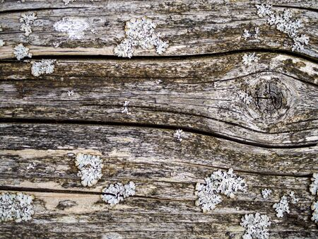 Detail Of Wood With Cracks And Cuts. Grey Wood Texture On The Old Crust. Old grey pine board with moss and lichen. Image for wallpaper, desktop. Copy space
