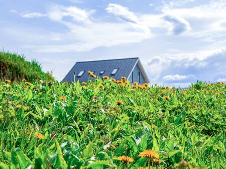 Summer day in garden-green nature background with wild flowers, house and herbs. Vacation on farm. Blooming dandelions on Sunny day against cloudy sky. Beautiful Countryside Landscape. filtered image