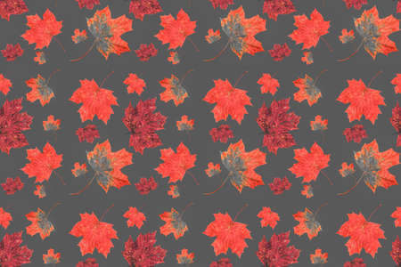 Abstract seamless texture, art wallpaper. Red and yellow autumn maple leaves Close Up and Collection of beautiful colourful leaves.Concept of autumn. Filtered image. Фото со стока