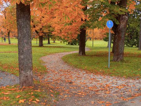 Autumn landscape. Selective focus. forest road leaves view. Road view