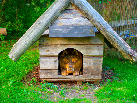 The wooden puppy looks out of the doghouse. beautiful pooch dog in the booth on a sunny day. House for an animal. copy space