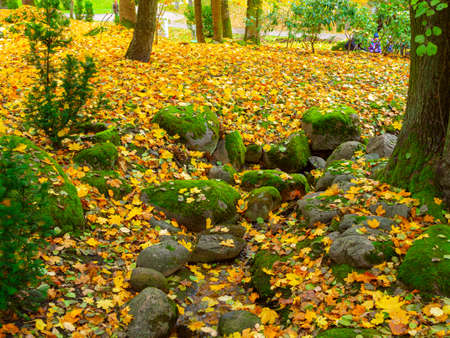 Autumn, Gold Trees in a park. The Season Of Colour. Autumnal Park. Trees And Leaves. Background group autumn orange leaves. Фото со стока
