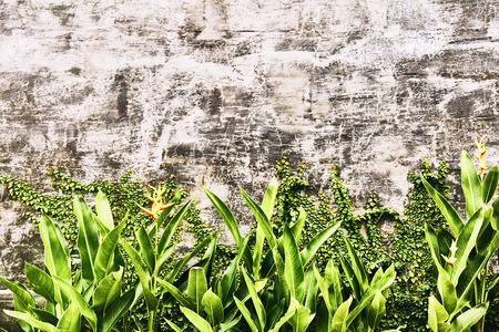 Old gray brick wall with green leaves. Texture. Bali. 写真素材 - 120960630
