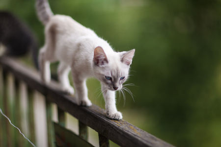Cute little kitten. A kitten on the balcony railing. Close-up.