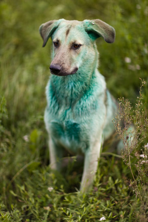 Dog soiled in green paint. Close up.