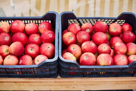 Red ripe apples, pile of fresh apple fruits, natural food.