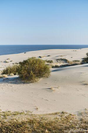 Dune Efa. Isthme de Courlande. région de Kaliningrad. L'été Banque d'images