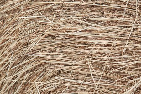 Hay abstract background close up. Straw on the floor background. Stok Fotoğraf - 129171170