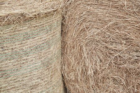 Hay abstract background close up. Straw on the floor background. Stok Fotoğraf