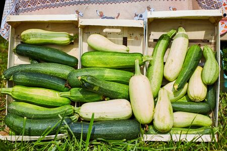 Raw green zucchini sold at a farmers market. 写真素材