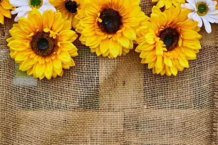 Sunflower flowers. Decor with flowers. Three sunflowers attached on a brown rag background