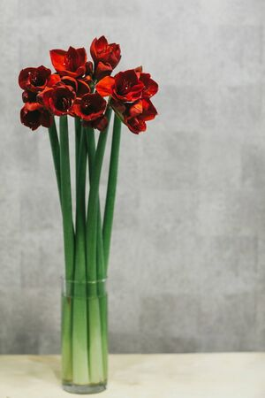 A bouquet of red callas close up. Imagens