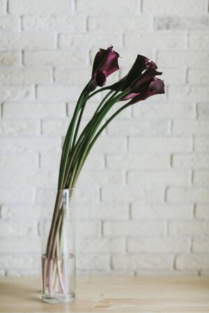 A bouquet of burgundy callas close up. 写真素材