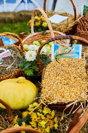 Agricultural Exhibition. Fresh harvest. pumpkin, apples, flowers.