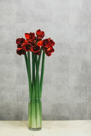 A bouquet of red callas close up. Stockfoto