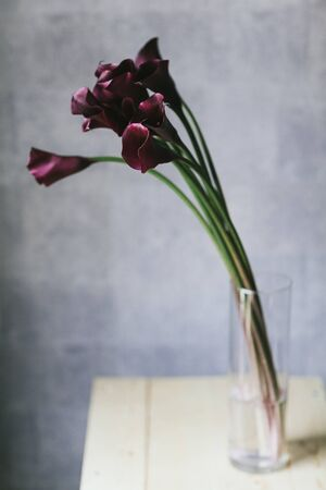 A bouquet of burgundy callas close up. Imagens