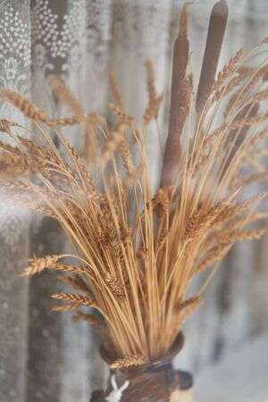 Wheat and reeds in a flowerpot. A plant of the family cereals. The decor of the apartment.