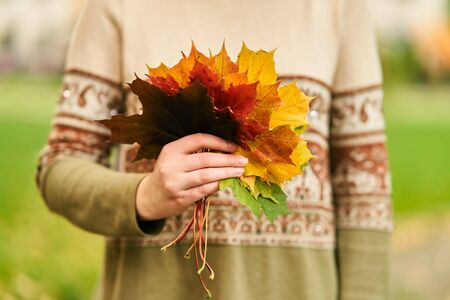 Autumn leaves in the hand. The Girl holds an autumn bouquet of colorful leaves.