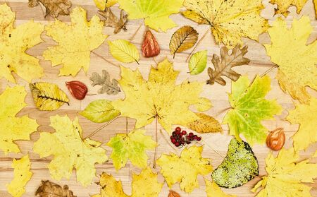 Autumn flat lay composition with dry leaves wreath frame on wooden background. Creative autumn. Top view, copy space Stock Photo