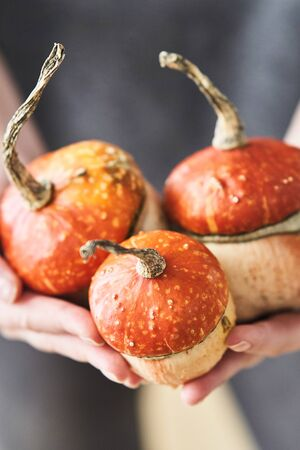A girl holds a decorative pumpkin in the shape of a mushroom. Mushroom-shaped decorative pumpkin. Stock Photo