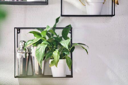 Ornamental plants in pots on a shelf. The decor of the interior.