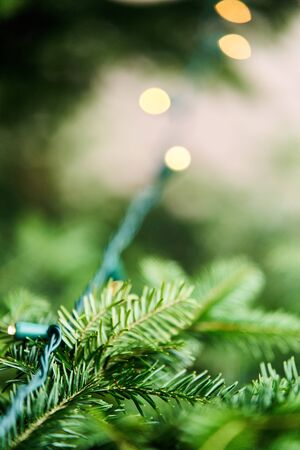 Christmas tree branch with garland. Close up. Stock Photo