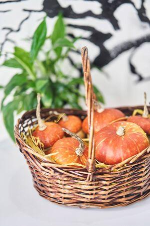 Basket with pumpkins on a white background. Mushroom-shaped decorative pumpkin