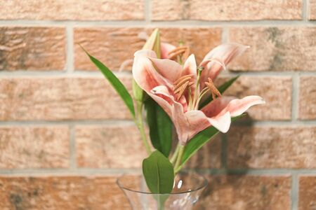 Pink lily flower in a vase close up. Stock Photo