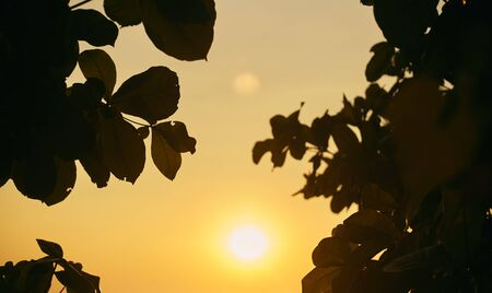 Sunset through the leaves of trees. Silhouettes of leaves on the sunset sky. Leaf frame.