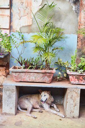 A stray dog sits under a bench on Panaji Street. Capital of Goa.