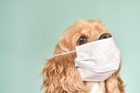 Dog in a medical mask. Prevention of viral diseases. Coronavirus epidemic