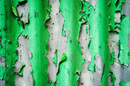 Texture of old peeling green paint on an iron fence