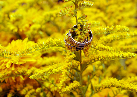 oneness: Two wedding rings among yellow flowers - wedding ceremony Stock Photo