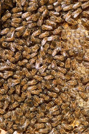 curative: beehive Stock Photo