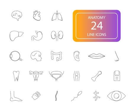 : Line icons set. Anatomy pack. Vector illustration