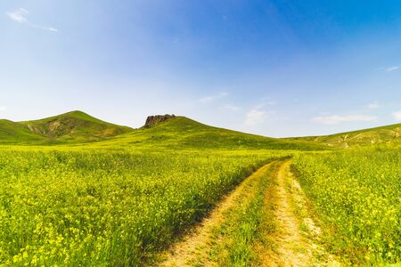 Large green field with a center road and bushes. Beautiful view of field with blue sky. Stock Photo